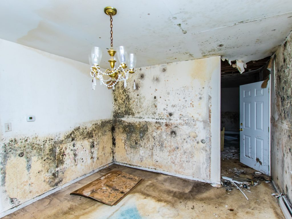 mold removal indianapolis, mold removal company indianapolis, mold remediation indianapolis